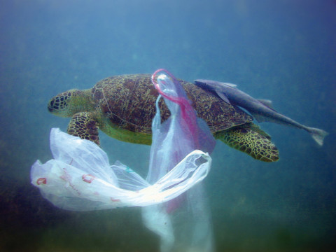 Das Verbot von Plastiktüten in der EU bis 2018